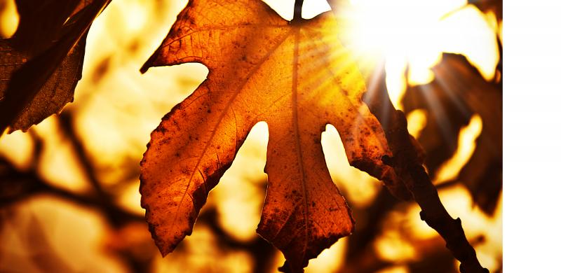 Poznaj kolorystyczne trendy na jesień!