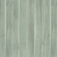 Colour of Silver Acacia